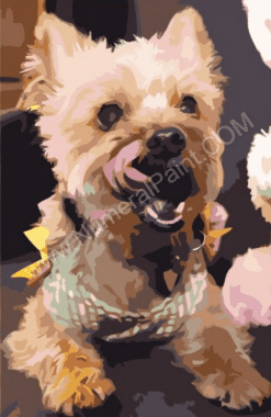 Dog paint by numbers