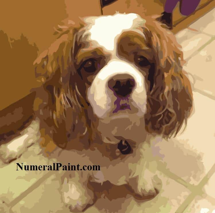 Personalized dog paint by number