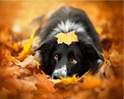 Maple Leaves Dog Animals Calligraphy Painting- DIY Paint By Numbers - Numeral Paint