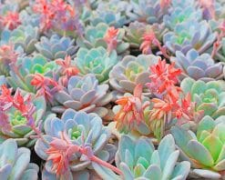 Succulent Plant Paint by numbers