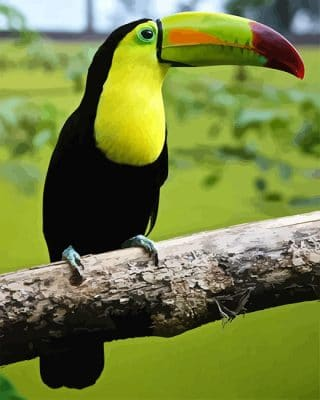 Loro Tucan Paint by number