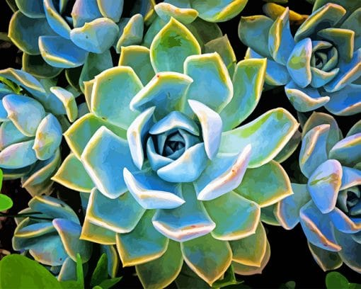 Plante Succulente Paint by number