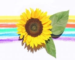 Rainbow sunflower adult paint by numbers