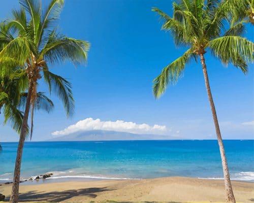 Tropics coast sea palma hawaii adult paint by numbers