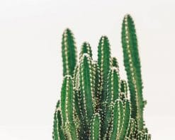 Beautiful Cactus Plant paint by number