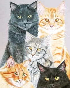 Cute cats adult paint by numbers