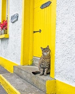 Cute kitty yellow door adult paint by numbers