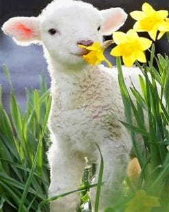 Cute Little Lamb paint by number