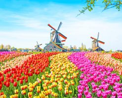 Field Colorful Tulip adult paint by numbers