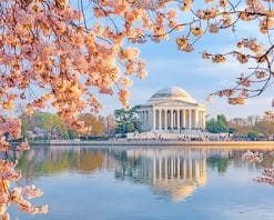 Jefferson Memorial In Cherry Blossom adult paint by numbers