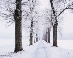 Snowy Pathway Surrounded By Trees paint by number