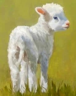 Cute Lamb paint by number