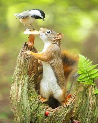 Cute Squirrel And Bird paint By Numbers