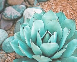 Succulent Near Rocks paint by numbers