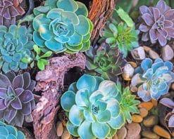 succulents plants paint by number