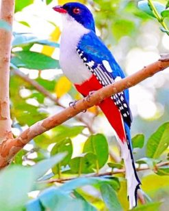 Cuban Trogon Paint by numbers