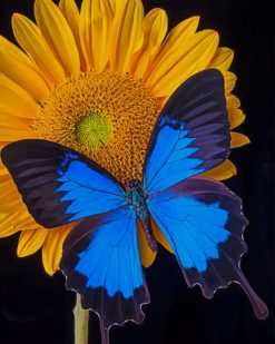 Black And Blue Butterfly On Sunflower paint by numbers