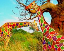 Cool Colorful Giraffes paint by number
