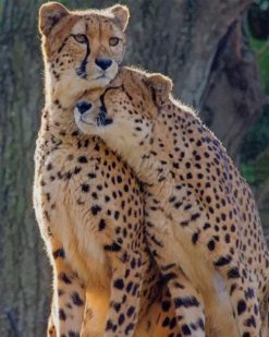 Leopard Couple paint by numbers