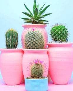 Aesthetic Cactus paint by numbers