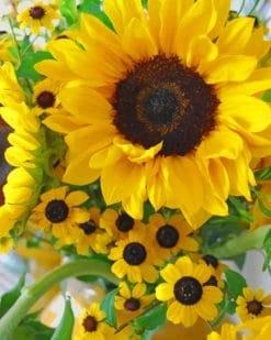 Beautiful Sunflowers paint by numbers