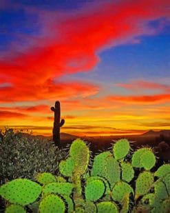 Cactus Desert Sunset paint by numbers