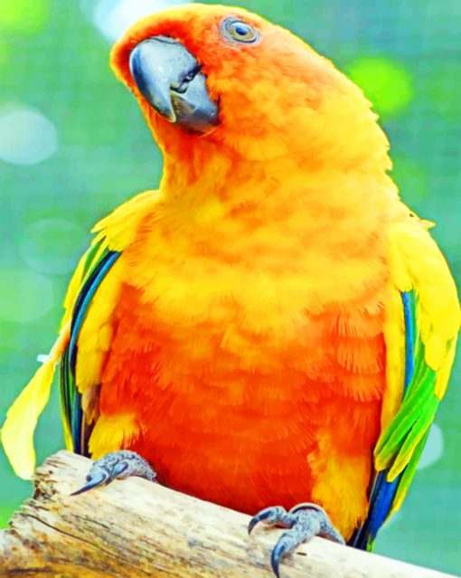 Scarlet Macaw paint by numbers