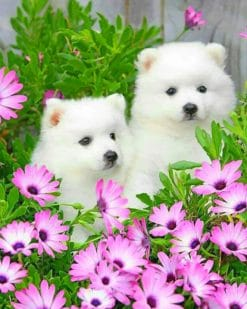 American Eskimo Dog With Daisy Flowers paint by numbers