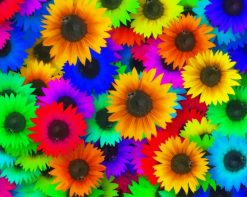 Colorful Sunflowers paint by number