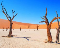 Deadvlei In Namibia paint by number