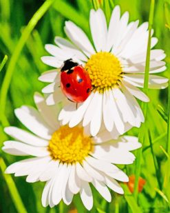 Ladybird On Daisy Flower paint by numbers