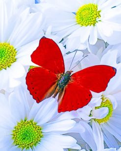 Red Butterfly On White Daisies paint by numbers
