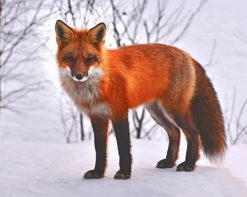 Red Fox In Snow paint by number