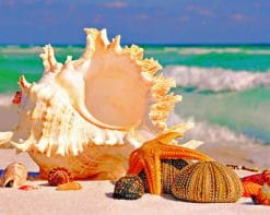 Conch And Starfish paint by numbers