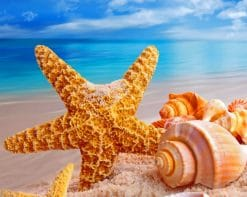 Starfish And Seashells paint by numbers