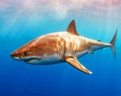 Great White Shark paint by numbers