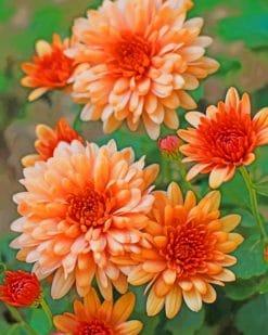 Peach Chrysanthemum Paint by numbers