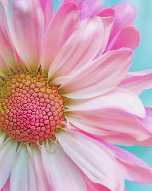 Pink Sunflower paint by numbers