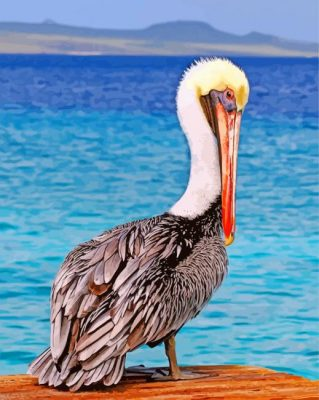 Pelican Bird paint by numbers