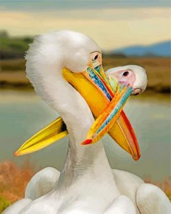 White Pelicans paint by numbers